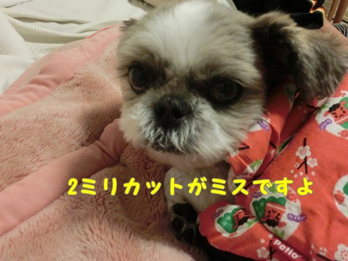 004-20141013-203306.jpg