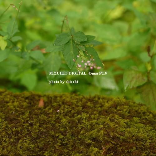 ゆのくにの森-44