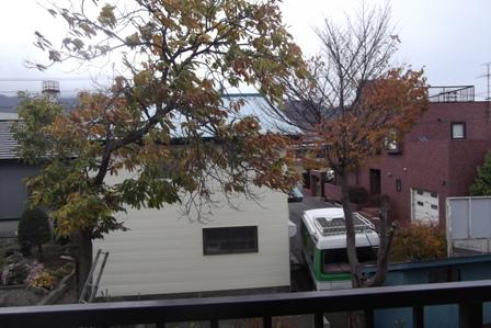 庭の栗と桜の木