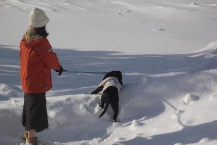 雪深いところが大好きなアルマくん