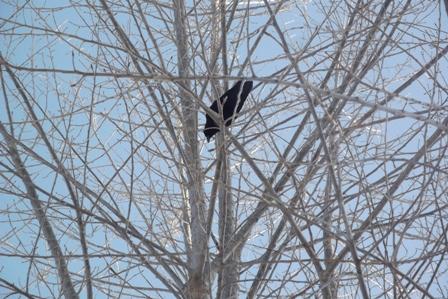 木の上にカラスが