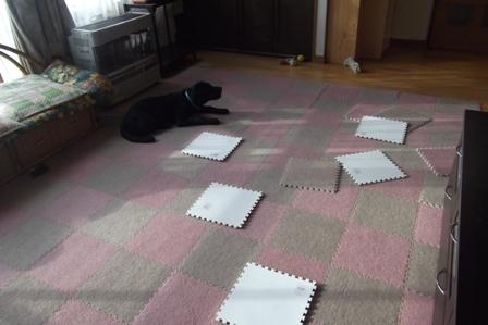 散らかったカーペット