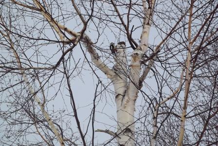 公園でキツツキがカンカン木をつついていた…