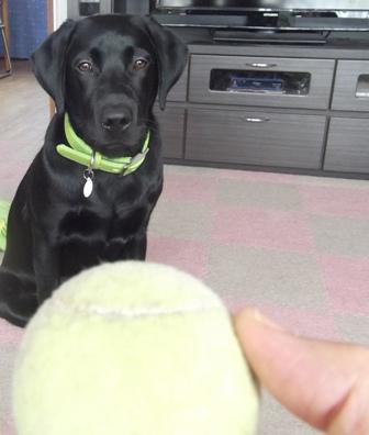 いいかい? ボールをキャッチするんだよ