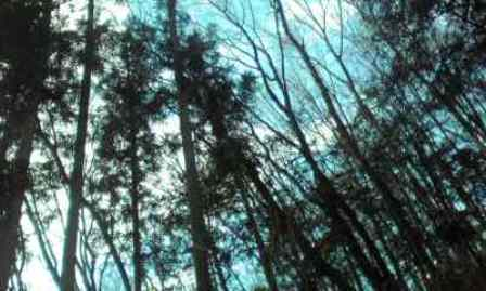 こんな林の中に家がある