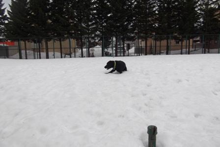 ずべつ 雪が少なくなった油断していたら、はまった