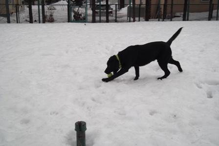 雪の中のボール遊びは楽しかったよ