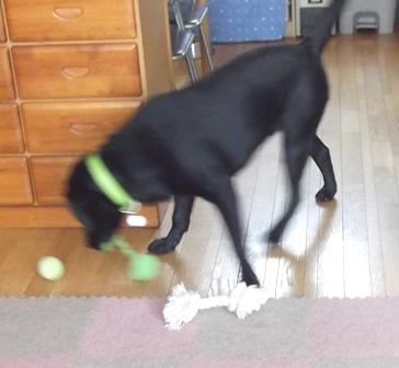 ボールでボールを転がしたり