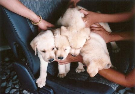 すずばあちゃんと兄弟犬たち