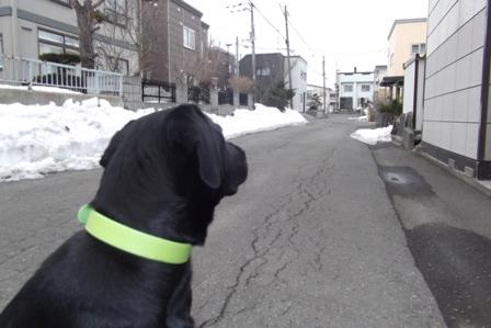 家の前の道路の雪も