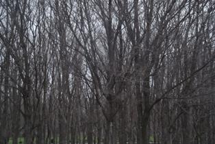すごい枝だなぁ