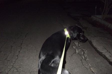 これから夜のお散歩