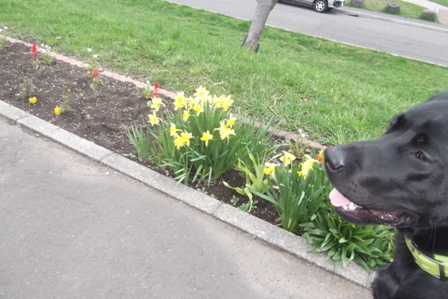 これは、咲いたのではなく、植えたって感じだね