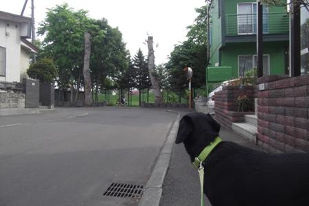 あ、お散歩わん子だ!