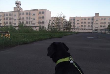 日が落ちてからのお散歩