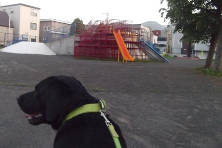 学校の近くの公園