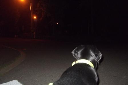 夜のお散歩は