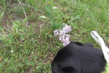 お花、みーっけ!