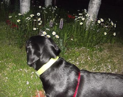 夜でも お花はきれいだね