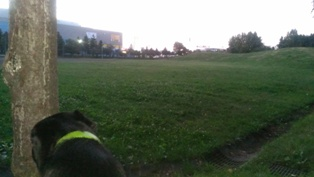 夕暮れ時の散歩