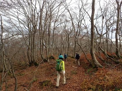 20141116大御影山11