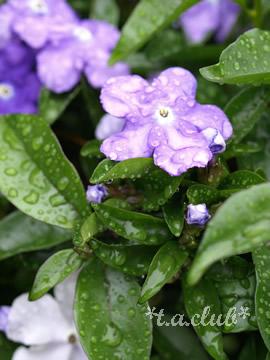 flower_1305_01.jpg