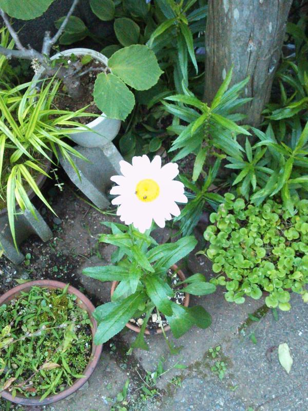 ダイアログインザダークの花