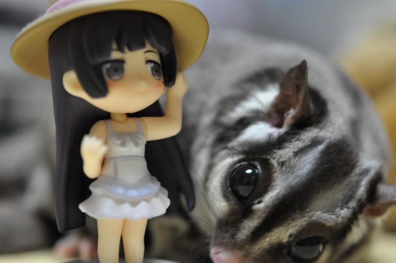 20120916黒猫とモモンガ