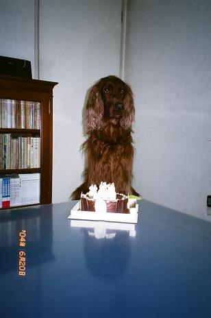 チャー坊4歳2004年