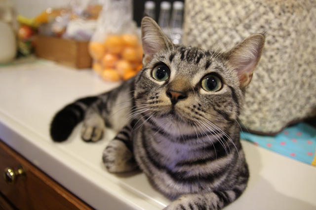ヘイスケ(別名:食い意地張り男)8ヶ月