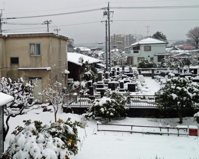 雪が積もった~!