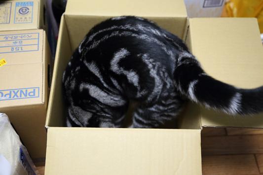 理想の箱を求めて・・
