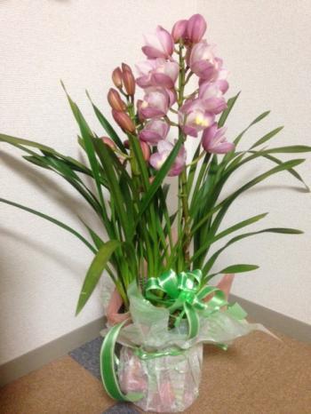 お花_convert_20130215001858
