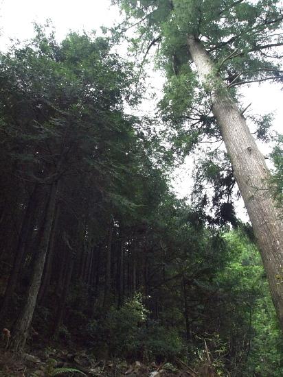 若木の森1