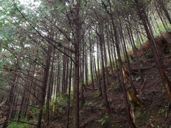 若木の森2