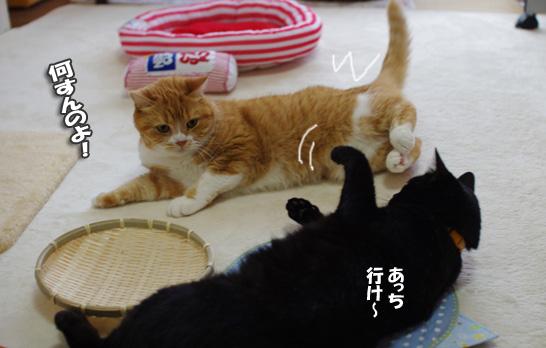 クーちゃんー0-0-03-2342