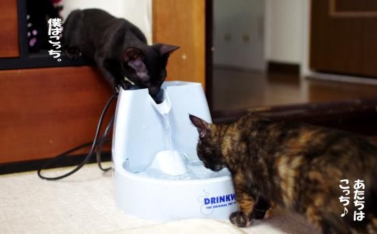 二人で水を飲む99030432のコピー