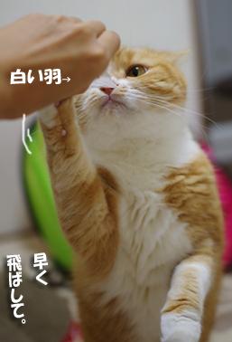 ぷーちゃんはしゃぐ2323232333のコピー