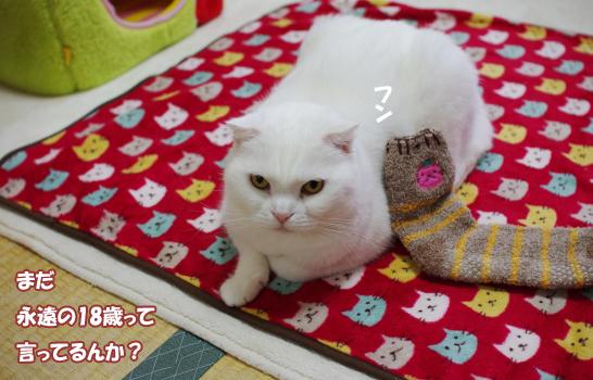 9え8w9ふぃふぃふぃふぃコピー