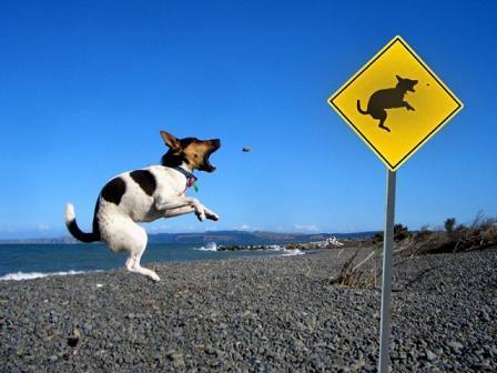 inu jump
