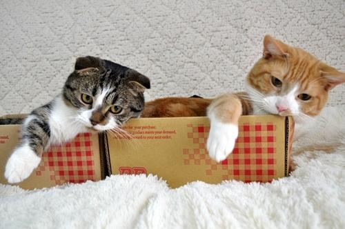 シンクロナイズド猫