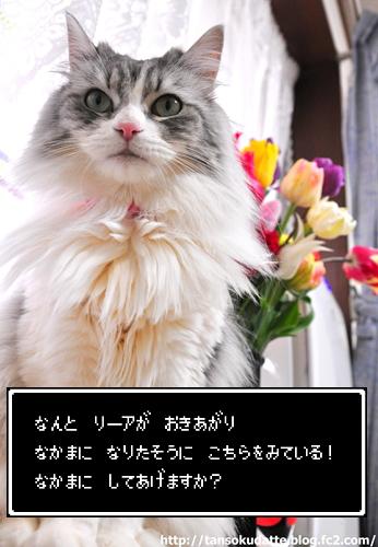 DSC_0854_Z.jpg
