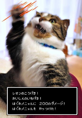 DSC_2701z.jpg