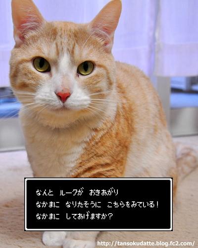 DSC_9495.jpg
