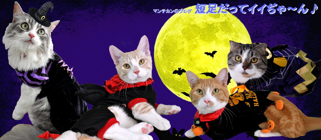 halloween-header10.jpg