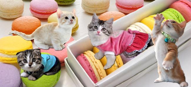 macaron-kiji.jpg