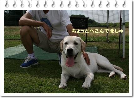 ドッグラン木曽川3