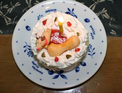 うちの子記念日2