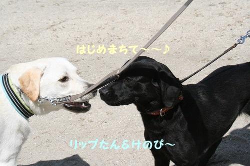 5・3琵琶湖6