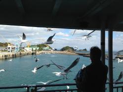 島原港のカモメ